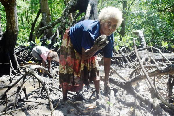 Nelli Paikai collecting mud shells in Fouele